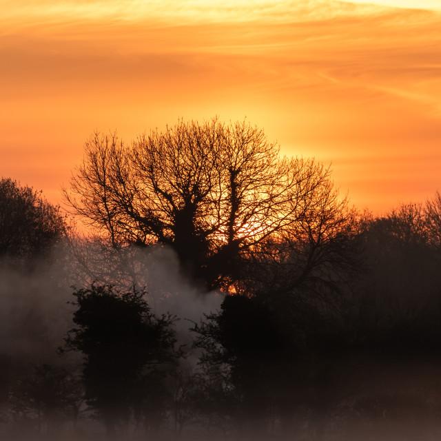 """""""Spring Sunrise"""" stock image"""