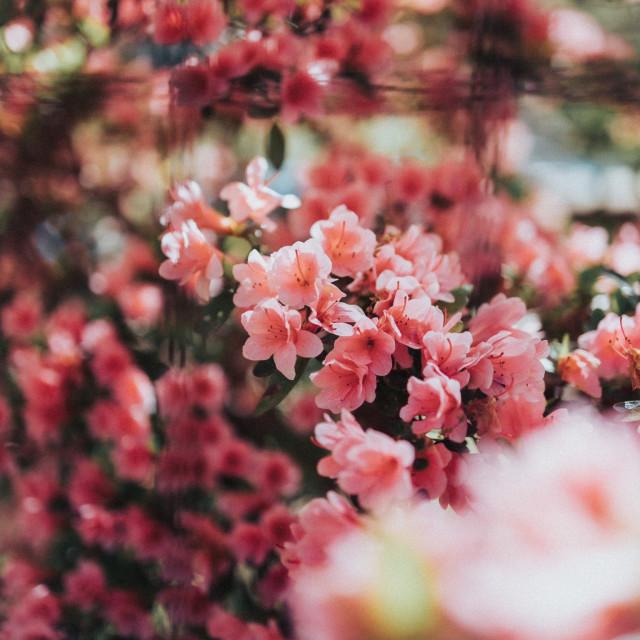 """Vintage flowers"" stock image"