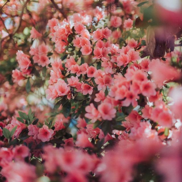 """Vintage pink flowers"" stock image"