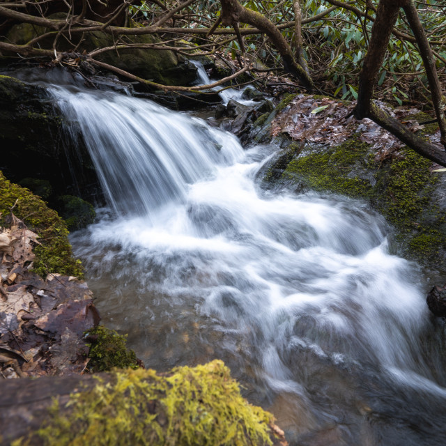 """""""fast flowing waterfall through an overgrown forest canyon"""" stock image"""