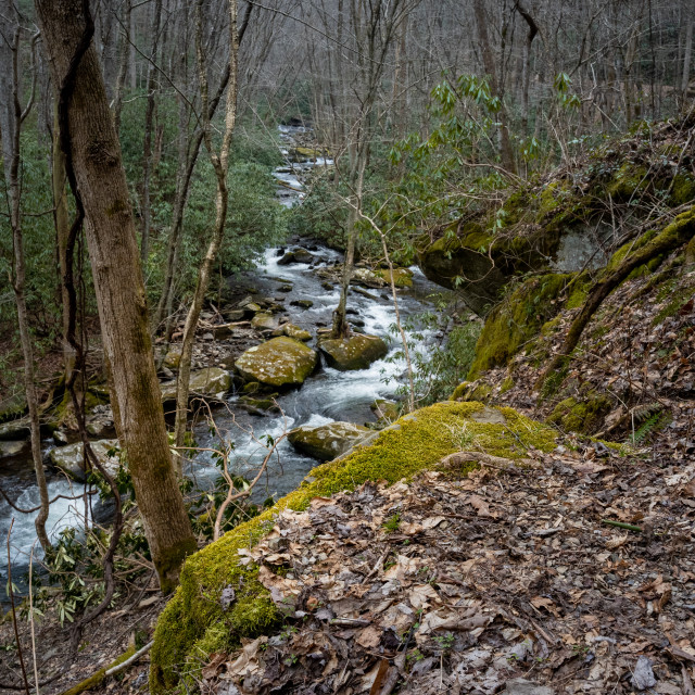 """""""creek from a cliff side trail with mossy rocks"""" stock image"""
