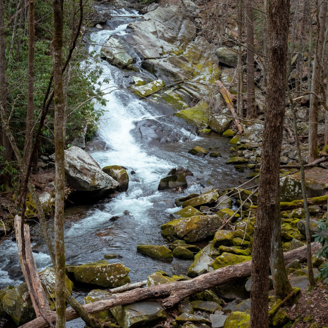 """""""rocky creek bed with a cascade and fallen trees"""" stock image"""