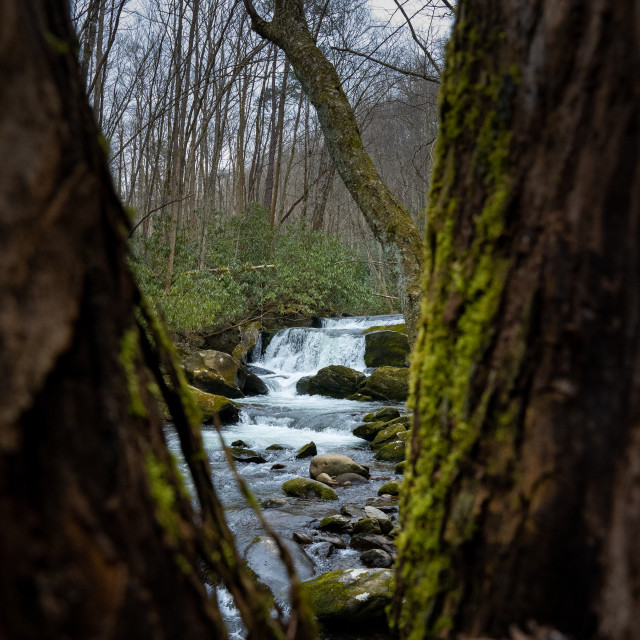 """""""lynn prong cascades through the branches of a mossy tree"""" stock image"""