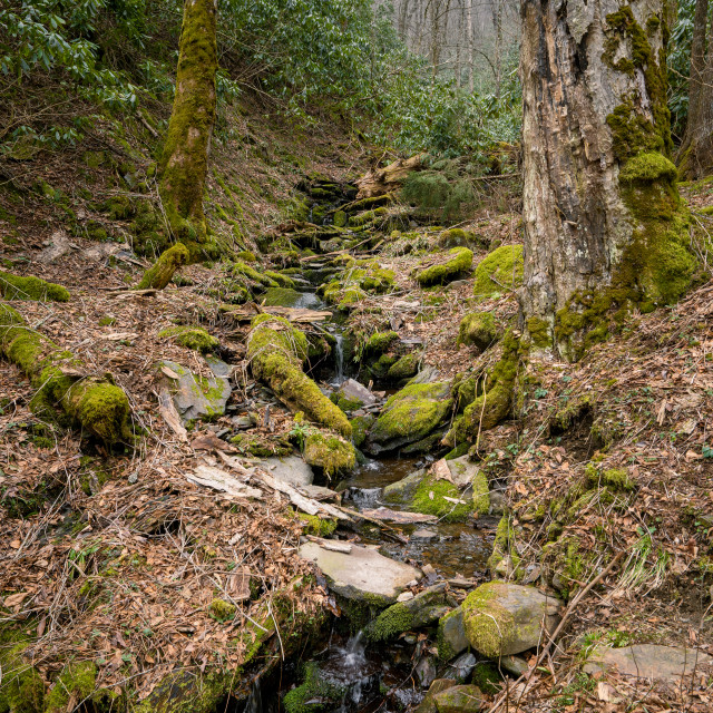 """""""mossy stream flowing down a mountain side"""" stock image"""