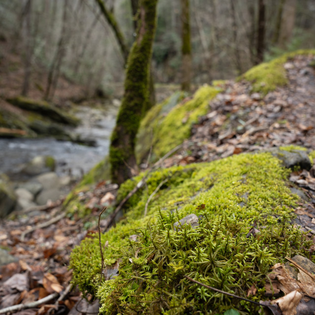 """""""moss on a rock along a forested creek"""" stock image"""