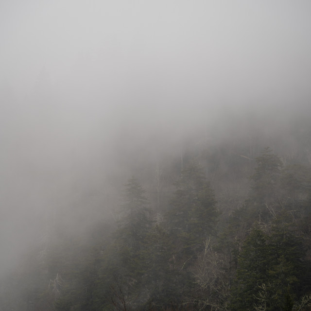 """""""cloud covering the forest in the great smoky mountain national park"""" stock image"""