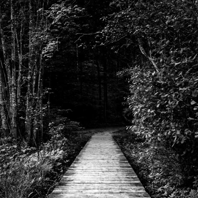 """A dark path"" stock image"