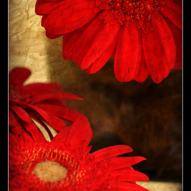 """""""Red flowers."""" stock image"""