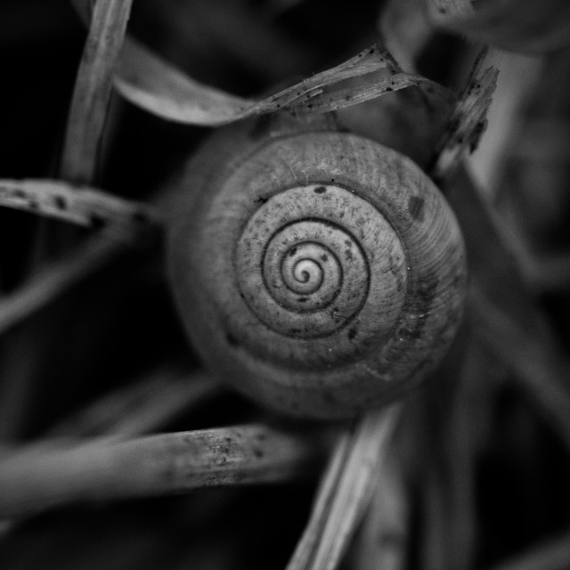 """""""Snail shell spiral"""" stock image"""