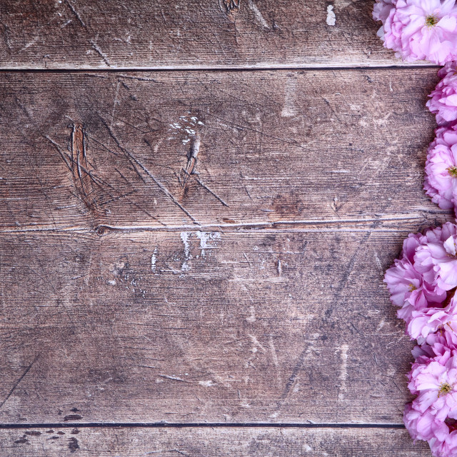 """""""Ornamental pink cherry tree blossom background on a rustic wooden table top with space for copy"""" stock image"""