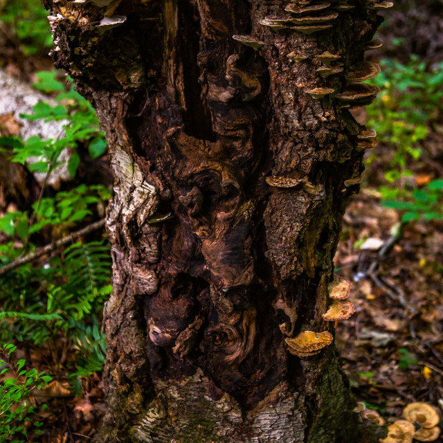 """""""Intriguing Tree Stump Supporting a Family of Fungi"""" stock image"""