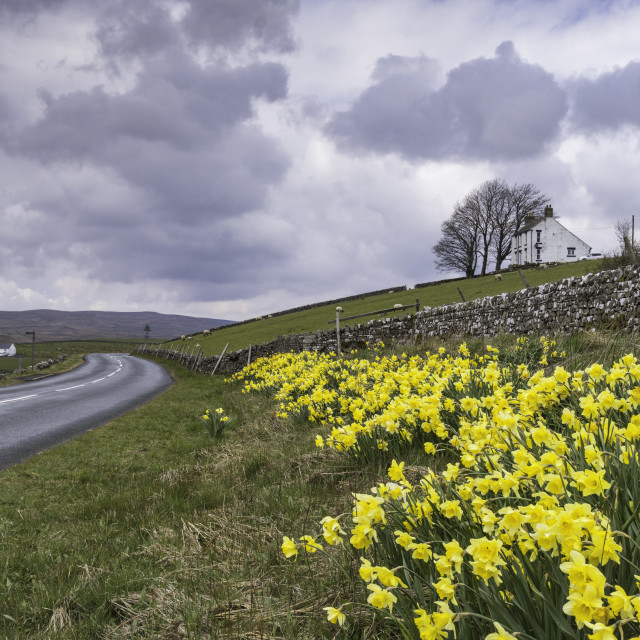 """""""Upper Teesdale in Spring"""" stock image"""
