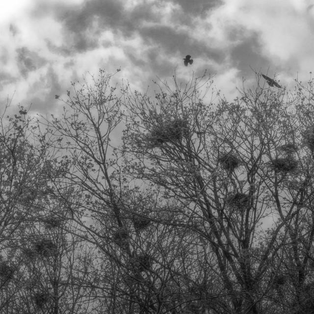 """Crows Nest's"" stock image"