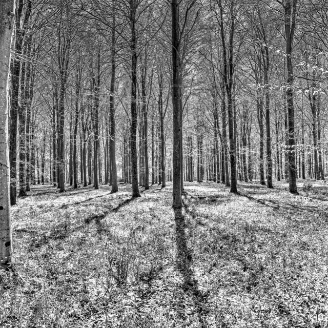"""""""Pitton Forest - Pitton, Wiltshire, England"""" stock image"""