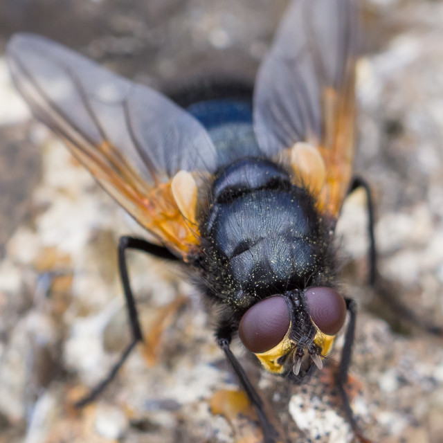 """""""Noon Fly"""" stock image"""
