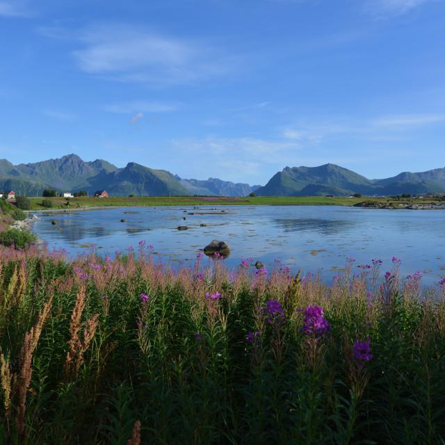 """Lofoten landscape"" stock image"