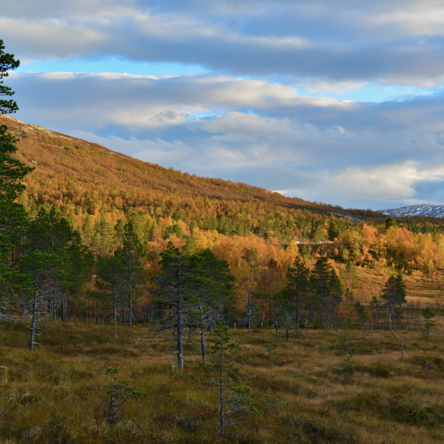 """""""Autumn forest in Norway"""" stock image"""