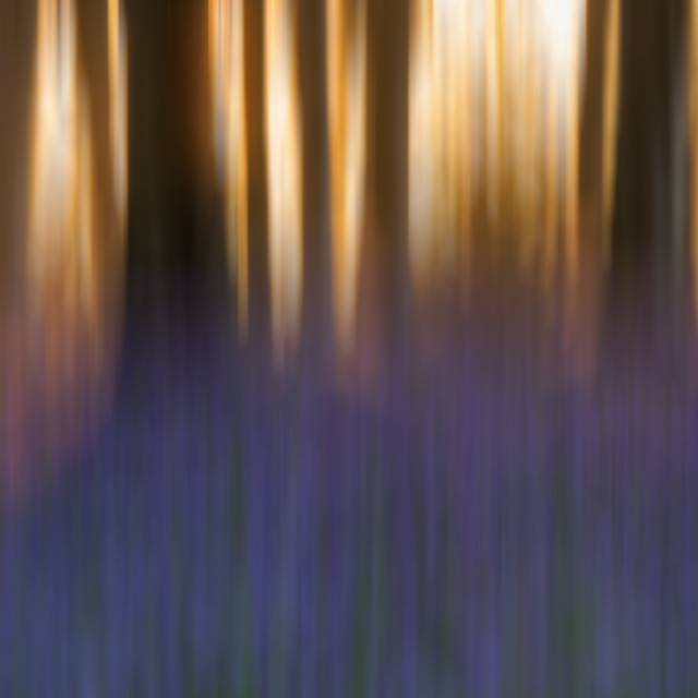 """""""Abstract bluebells"""" stock image"""
