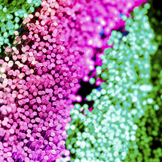 """Macro view of colourful fibre optic strands"" stock image"