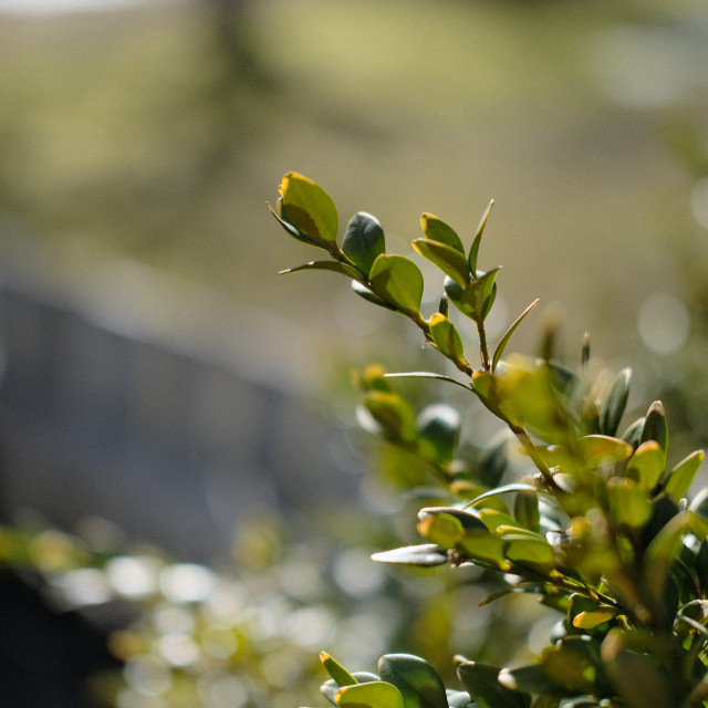 """""""Backlit bush"""" stock image"""