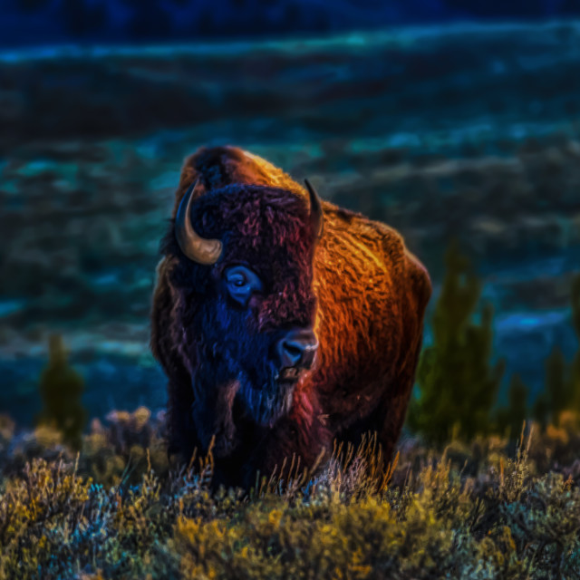 """lamar valley-animal-wild-yellowstone-buffalo"" stock image"