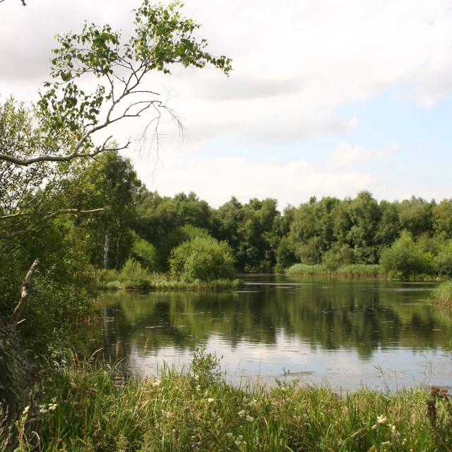 """Pensthorpe Nature Park"" stock image"