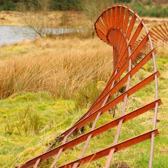 """""""Man and Nature - Cogra Moss"""" stock image"""