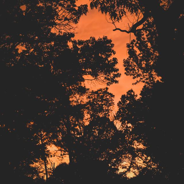 """""""Matte sunset"""" stock image"""