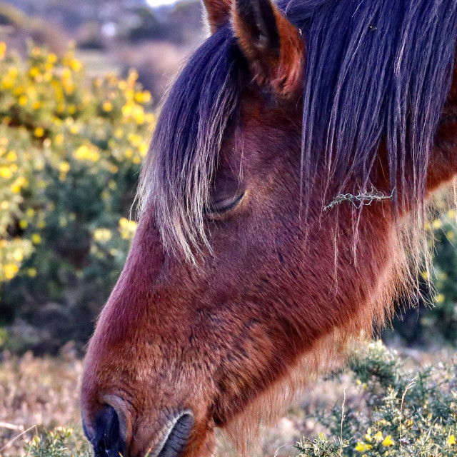 """""""Contented Pony"""" stock image"""