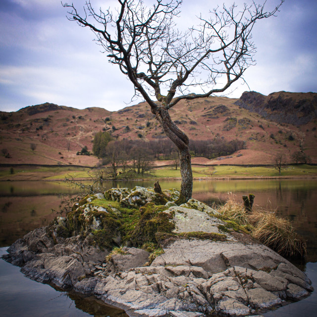 """""""Lone tree Rydal water"""" stock image"""