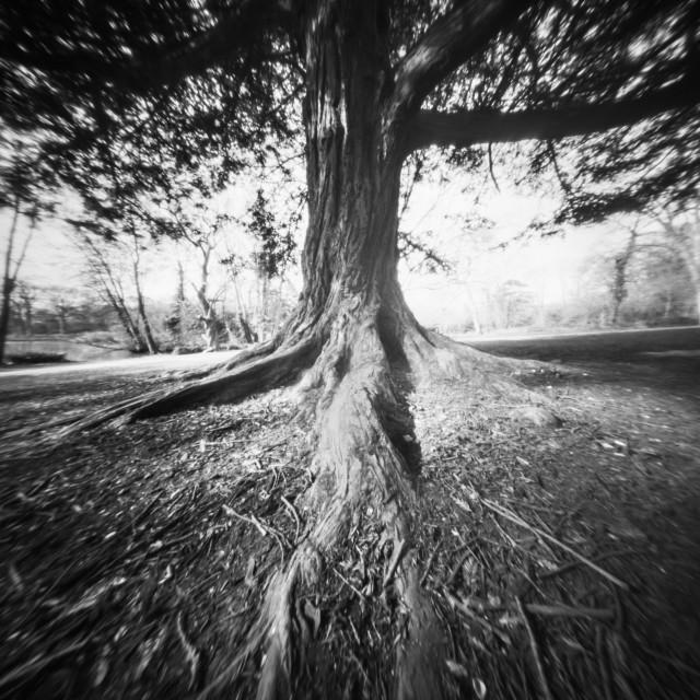 """""""Tree - Pinhole photo"""" stock image"""