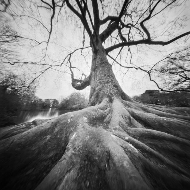 """Rooted - Pinhole photo"" stock image"
