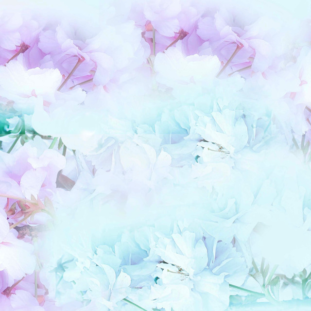 """""""Pink and green Blossoms"""" stock image"""