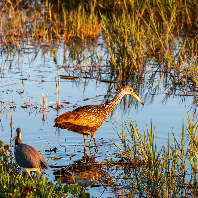 """""""Two Birds Bathing in the Golden Light Of Early Morning"""" stock image"""