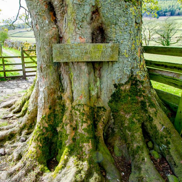"""Dales Way Walk, Instruction Sign on Tree Trunk Near Burnsall, Yorkshire."" stock image"