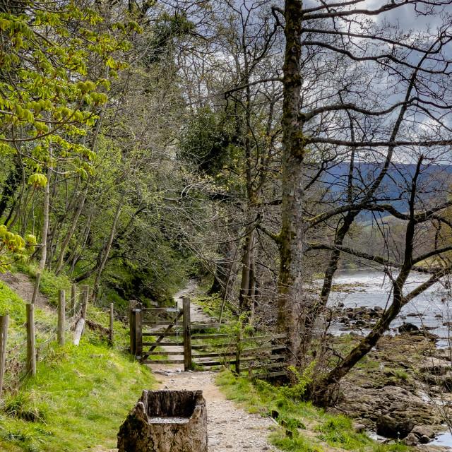 """""""Dales Way Footpath, Seat carved in Tree Trunk, next to River Wharfe, Yorkshire Dales."""" stock image"""