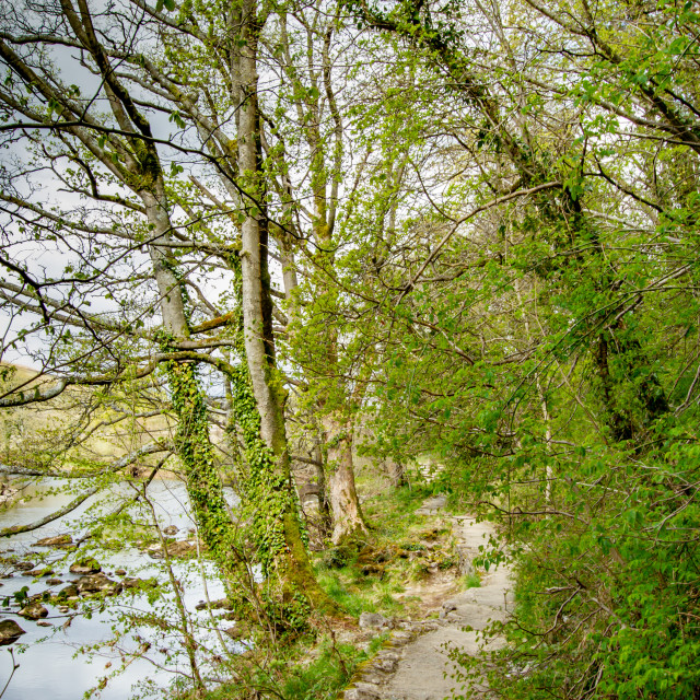 """""""Dales Way Footpath. Next to River Wharfe near Burnsall, Yorkshire Dales."""" stock image"""