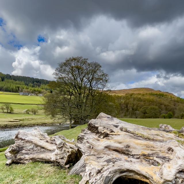 """River Wharfe near Burnsall, Yorkshire Dales."" stock image"