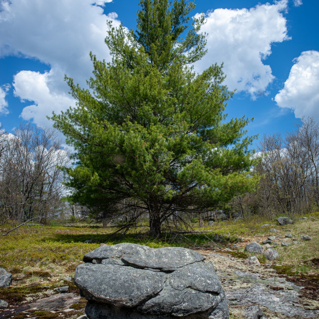 """""""Tree and Rock"""" stock image"""