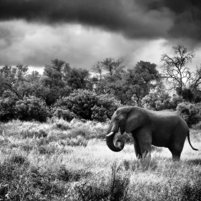 """Elephant scene"" stock image"