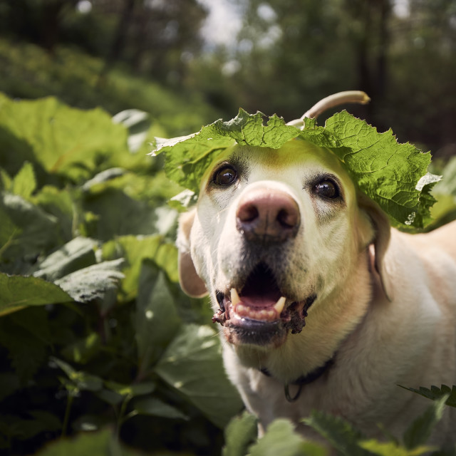"""""""Funny portrait of cute dog in nature"""" stock image"""