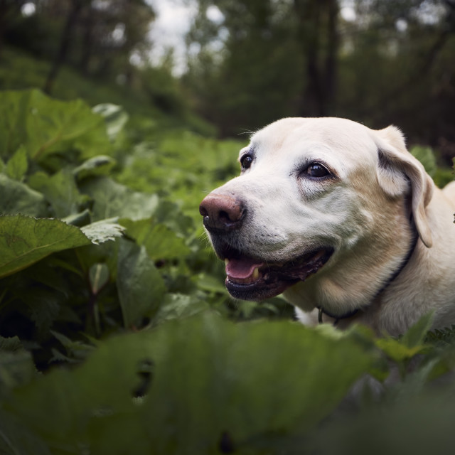 """""""Portrait of cute old dog in nature"""" stock image"""