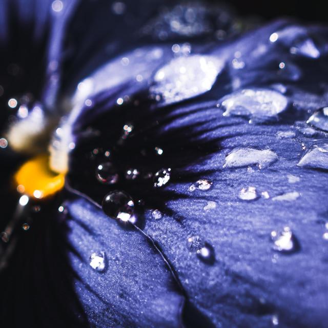 """""""Flower enjoying a morning shower."""" stock image"""