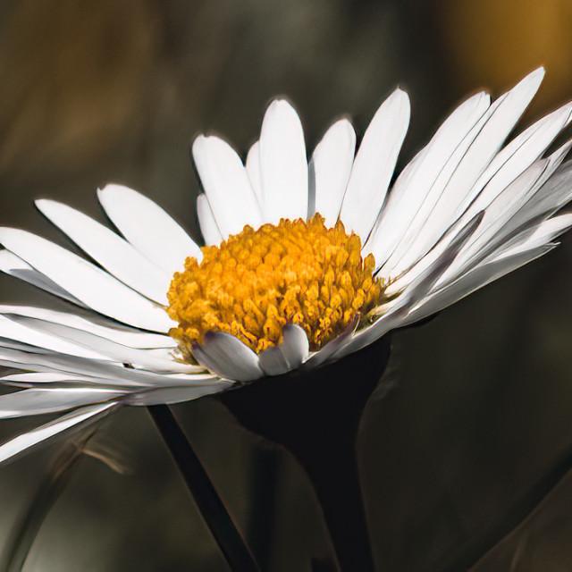 """""""Daisy enjoying the sunshine."""" stock image"""