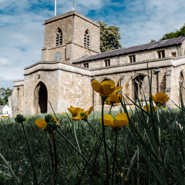 """""""Buttercups from Fen Ditton Church, Cambridge UK."""" stock image"""