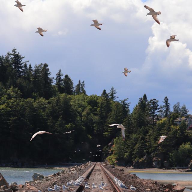 """Squad gulls"" stock image"