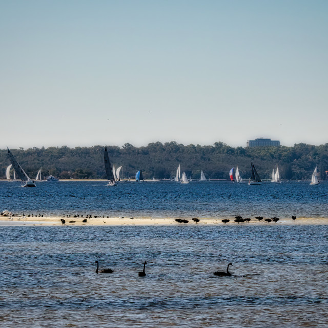 """""""Swan River Sand Bar with Many Water Birds"""" stock image"""
