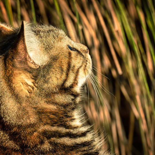 """""""Tabby Looking Up"""" stock image"""