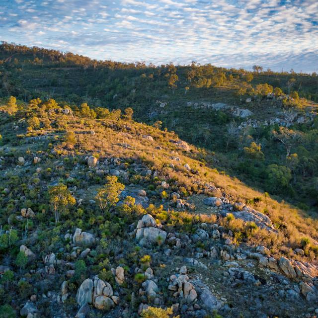 """""""Sunlit Bushland Ridge 2"""" stock image"""