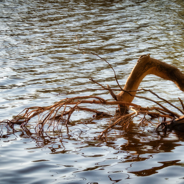 """Semi Submerged Riverbank Tree"" stock image"